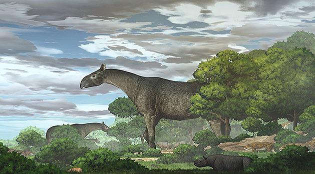 Největší suchozemský savec v dějinách Země byl nejspíš nosorožec, ukazuje nový nález