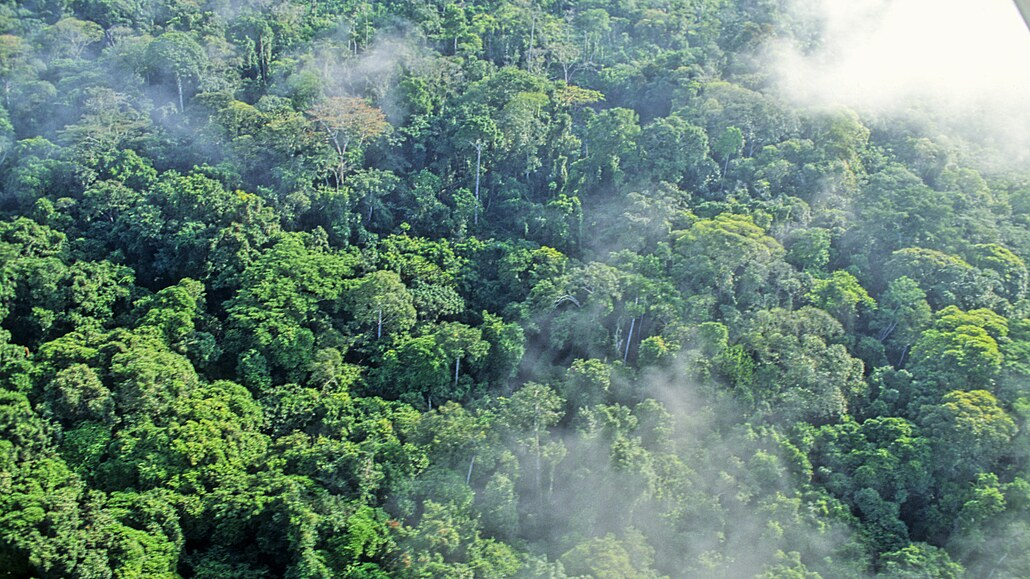 Gabon chce vydělávat na pohlcování uhlíku, ropu nahradí lesním kapitálem