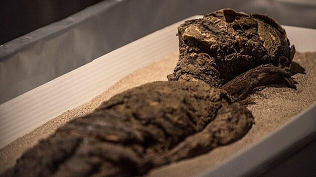 UNESCO zařadilo na seznam chilské mumie, jsou nejstarší na světě