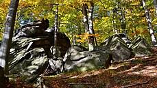 Seznam UNESCO se rozšířil o první českou přírodní lokalitu. Nově do něj patří Jizerskohorské bučiny