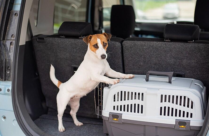 Do zahraničí vystavte psovi pas, při cestě pozor na klimatizaci v autě