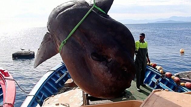 Rybáři u pobřeží severní Afriky chytili dvoutunový kolos