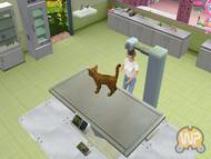 Animal Hospital: Pet Vet 3D