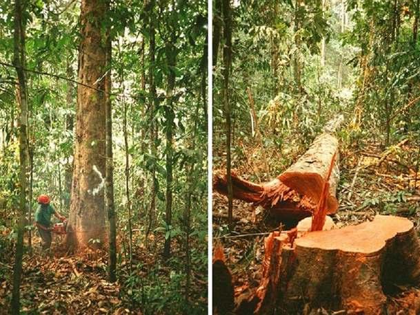 """Pralesy pustoší """"skryté"""" kácení"""