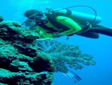 Zachraňte korálové útesy, 100 milionům lidí hrozí hlad