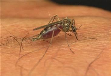Bakterií proti komárům