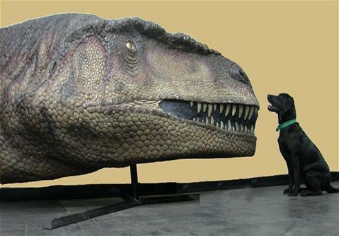 Dinosauři zřejmě lovili v tlupách