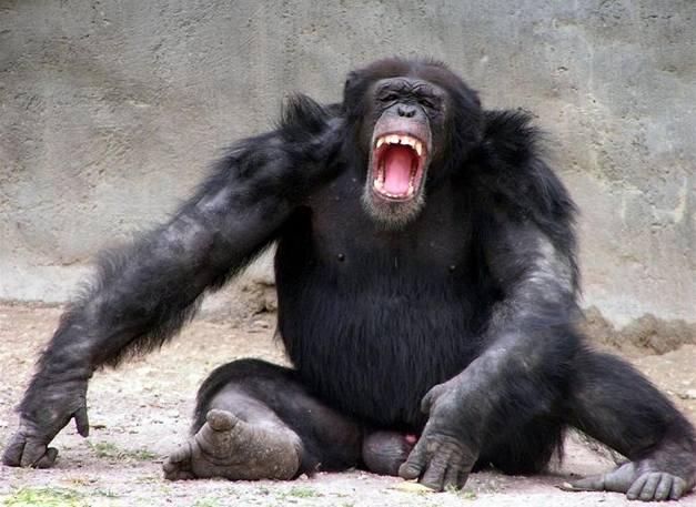 Šimpanzí války matek