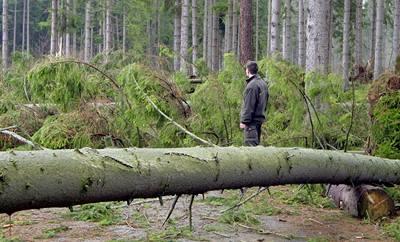 Lesy ČR hlasí největší kalamitu v historii