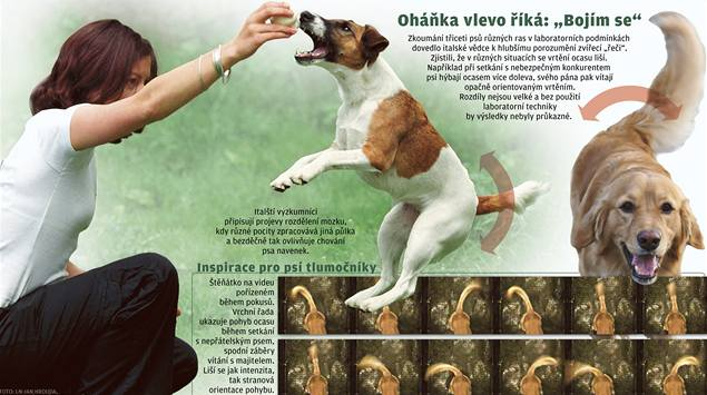Vědci sestavili slovník psí řeči