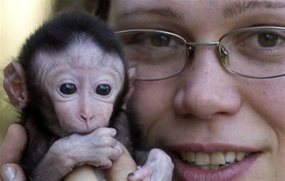 Máme přečtené i makaky