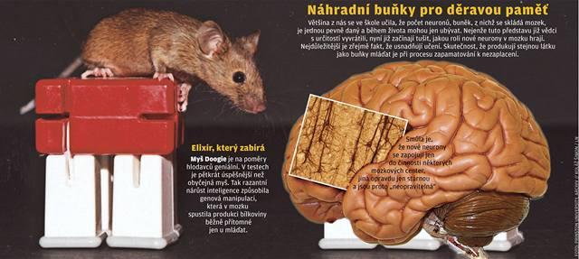 Nové buňky omlazují mozek