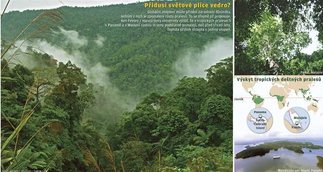 Oteplování brzdí růst pralesů