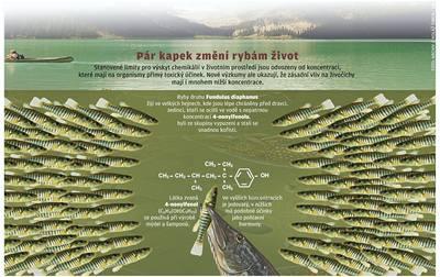 Chemikálie činí z ryb psance