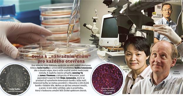 Kmenové buňky z lidské kůže