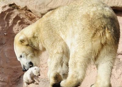 V pražské zoo uhynulo lední medvídě