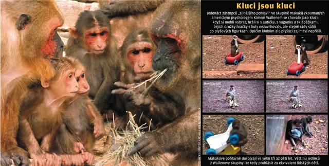 I opičí kluci mají radši auta