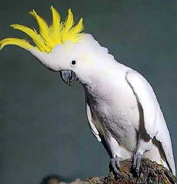 Bílí ptáci umějí tančit