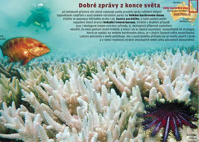 Knokaut nepříteli korálů
