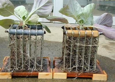 Vousatá budoucnost plodin