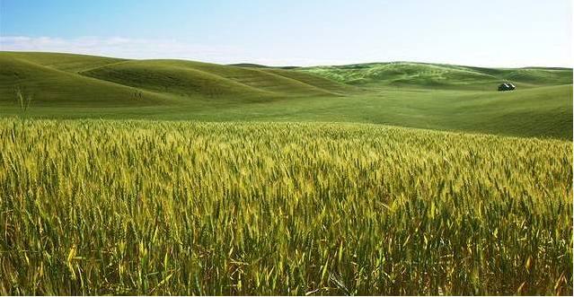 Lesklejší plodiny ochladí klima