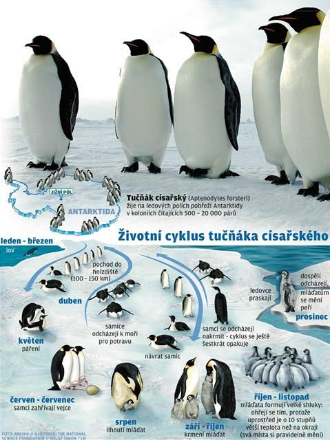 Tučňákům zvoní hrana