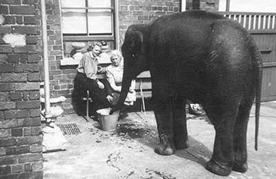 Zoo pátrá po tajemné zachránkyni slůněte
