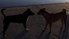 Pět let žila mezi psy, chová se jako oni