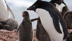 V 'prokleté' košické zoo umírají tučňáci, jednoho ubily děti