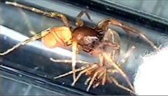 Objev sadistického pavouka českého vědce proslavil
