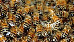 Letadlo mířící do Moskvy zamořily včely