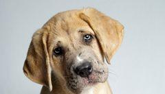 Lidé věří, že pes cítí vinu. Není to pravda, tvrdí vědci