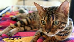 Miami děsil brutální vrah koček. Dopadli osmnáctiletého mladíka