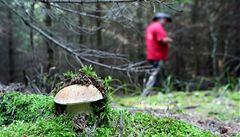 Letošní houbařská sezona je velmi atypická, rostou i lanýže