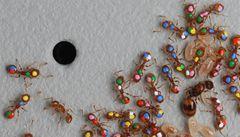 Mravence marketing nezláká