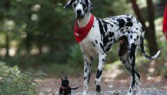 Zemřela televizní hvězda a terapeut Gibson, nejvyšší pes na světě