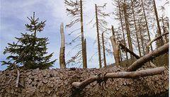Vláda schválila miliardy pro vlastníky nestátních lesů. Měly by kompenzovat nižší tržby kvůli kůrovci