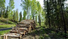 Biomasa devastuje české lesy. Těžaři si odnášejí úplně všechno