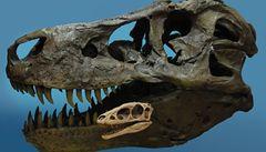 Vykopávky odhalily stokrát zmenšeného tyranosaura