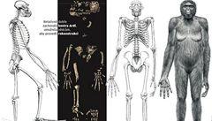 Máme nejstarší kostru lidského předka