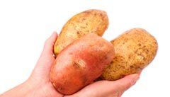 Brusel povolil pěstovat v EU geneticky modifikované brambory