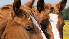 Vědci přečetli geny koně