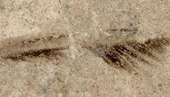 Našlo se pero staré 150 milionů let. Může být nejstarší na světě