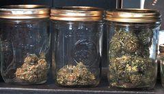 Pět rostlin konopí a 40 houbiček budou jen přestupek, řekla vláda