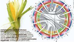 Vědci přečetli velmi dlouhý genetický kód kukuřice