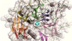 Pohyb nebezpečné bakterie řídí jediný atom vápníku