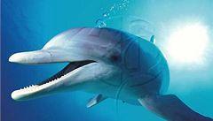 Delfíny a netopýry přivedla k využívání ultrazvuku stejná mutace