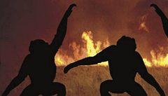 Šimpanzi při požáru nepanikaří. Někdy mu čelí tancem
