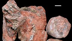 V Indii našli zkamenělého hada požírajícího malé dinosaury