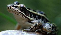 Žabí bakteriální kosmetika